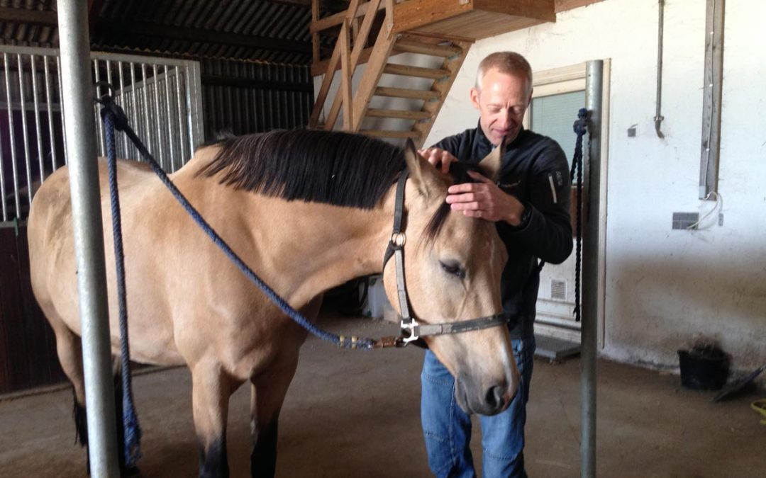 Biodynamisk Kranio-Sakral Terapi på heste