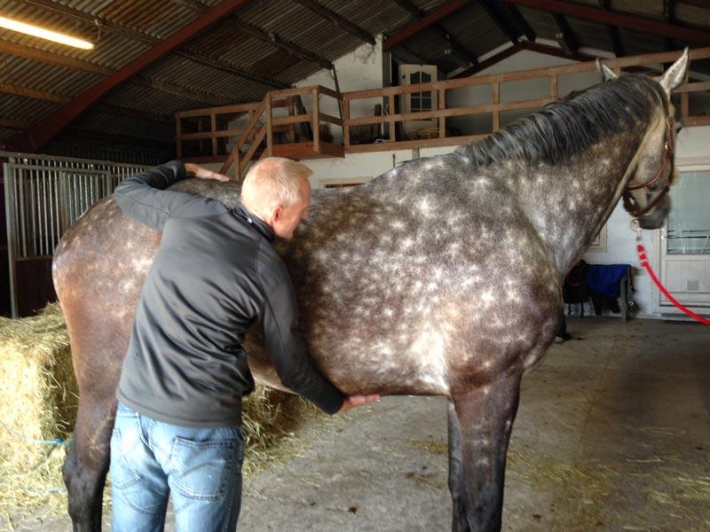 Biodynamisk Kranio-Sakral Terapi på dyr